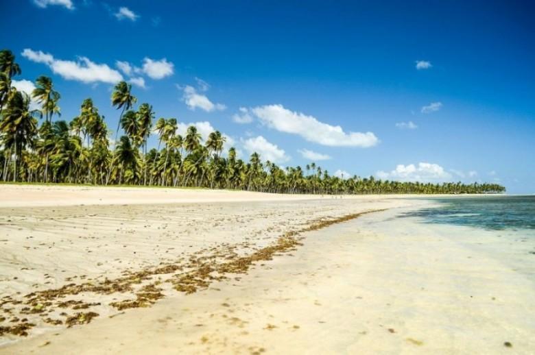 Praia em São Miguel dos Milagres com coqueiros