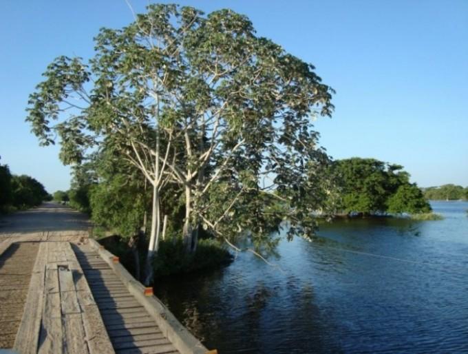 Ponte de madeira no Pantanal cercada por vegetação