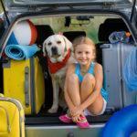Dicas para viajar com animais de estimação