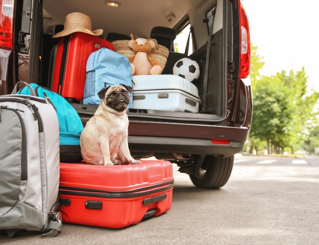 viajar-com-pet