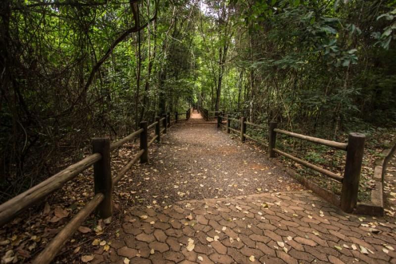 Trilha no Parque Nacional de Brasília cercada de árvores