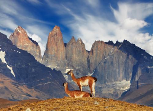 Guanacos no Parque Nacional Torres del Paine, na Patagônia Chilena.