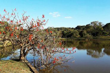 Vista do Parque Monsenhor Emilio Salem em Campinas, interior de São Paulo