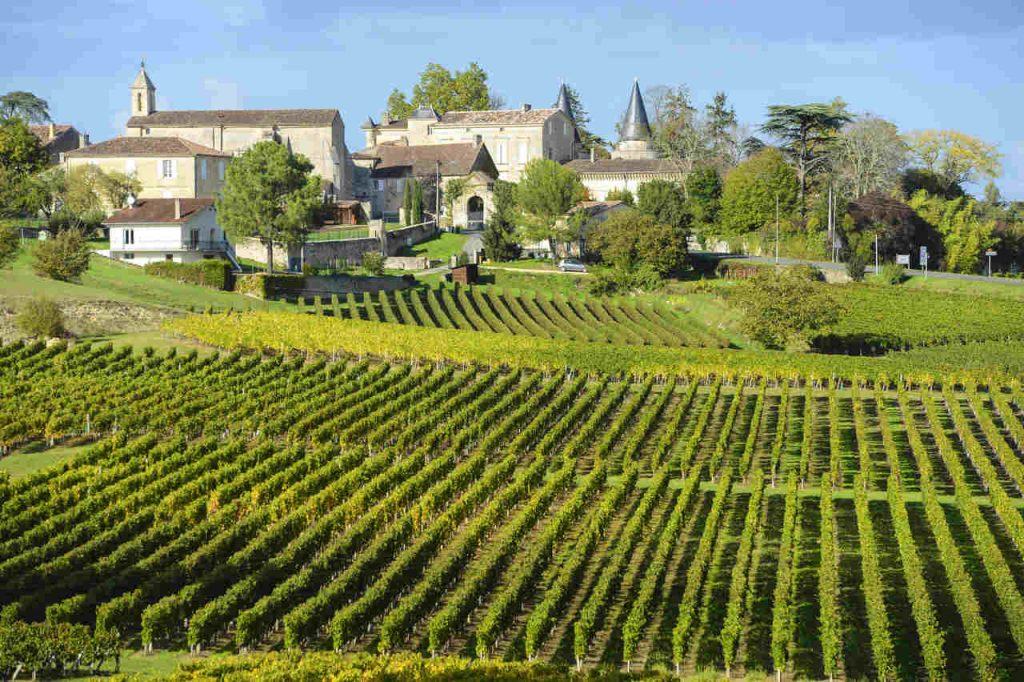 Vista aérea de um vinhedo em Bordeaux, na França