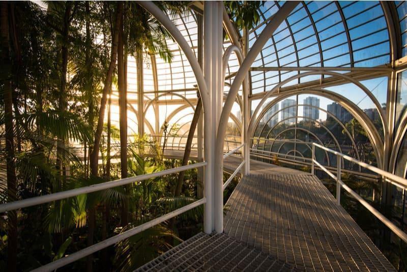 interior da estufa do jardim botânico de curitiba