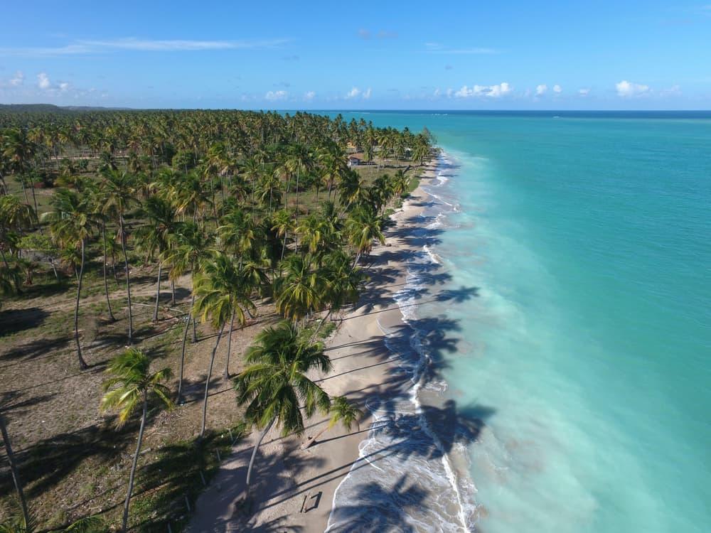 vista aérea dos coqueiros na praia do antunes em maragogi